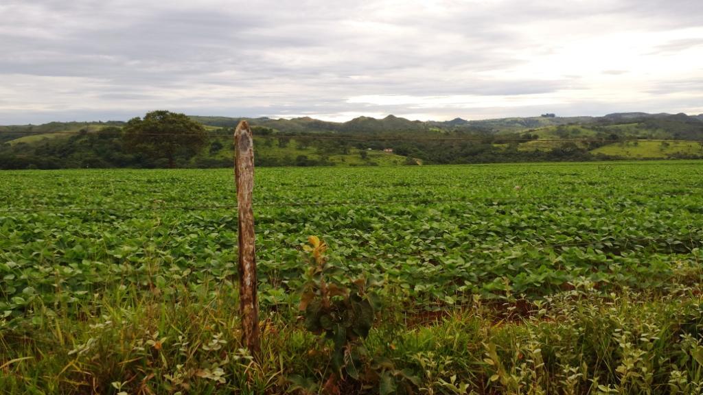 Vista da fazenda onde nasci e vivi minha infância. Perto de Alagoas, distrito de Patos de Minas, MG