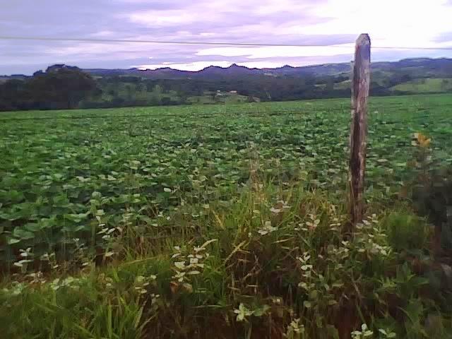 Chegando no dia 17.01.2014 na fazenda onde nasci em Alagoas, distrito de Patos de Minas