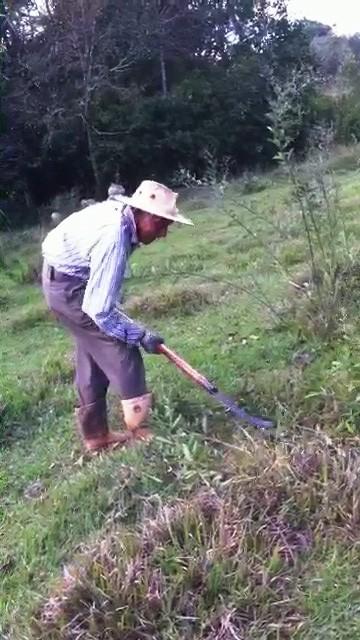 José Nicolau, meu pai, batendo pasto em junho de 2015